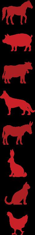 Tierarzt-Dr-Fueldner-Ellrich-leistungen